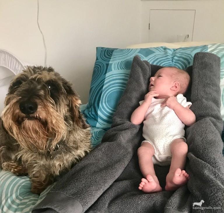 Dachshund and Baby