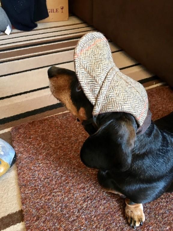 Juno Sausage Dog