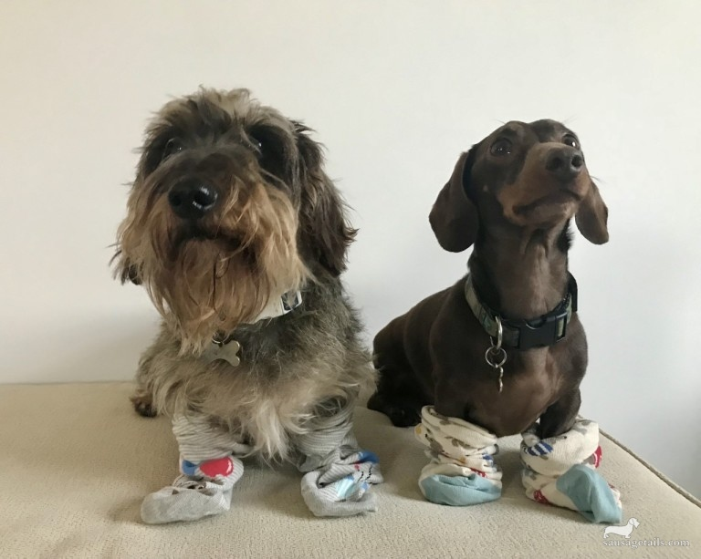 Dogs in Socks