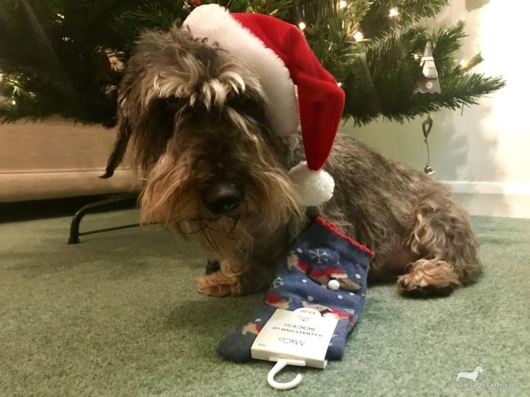 Sausage Dog Christmas Socks