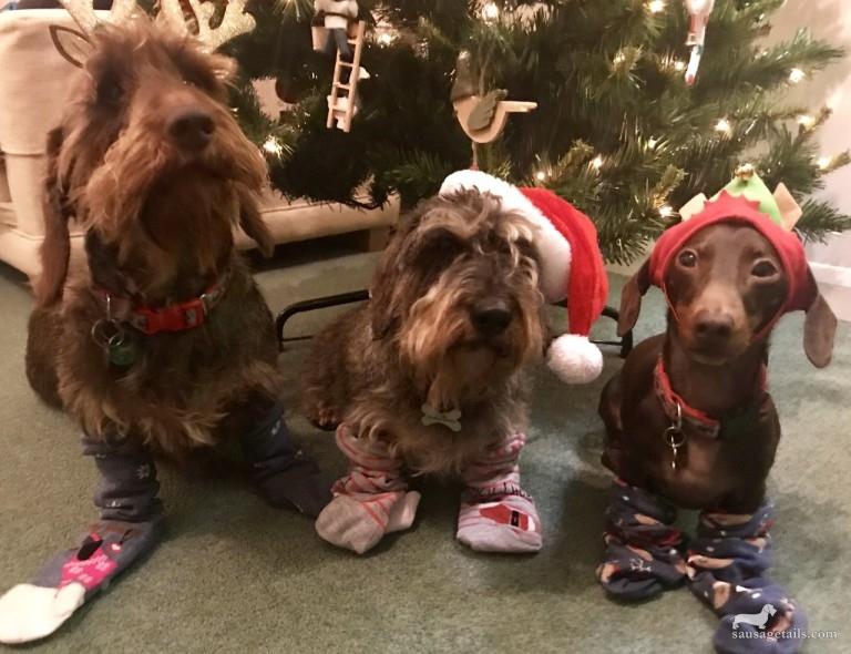 Sausage Dog Christmas